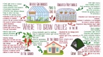 Where to grow chillies in the uk